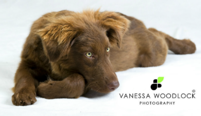 Vanessa Woodlock Photography